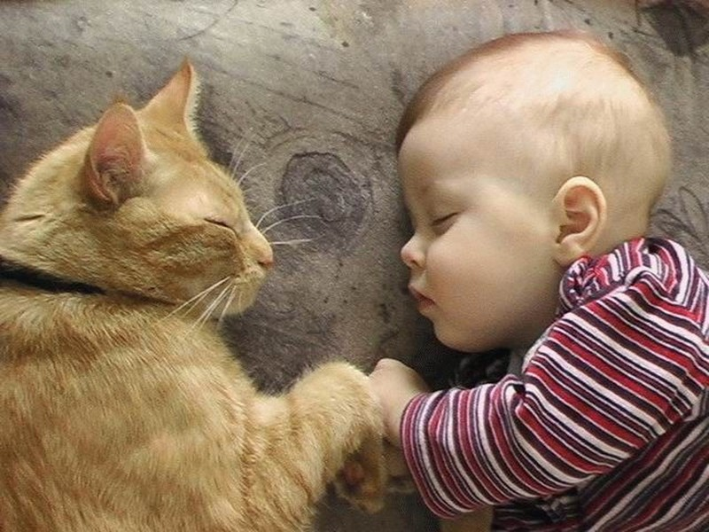 cat and child therapy